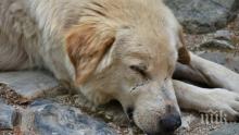 Жестокост! Отровиха куче и го захвърлиха в парк в Девин