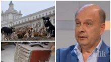 ЕКСПРЕСНО! Георги Марков за европредседателството: Борисов заби брадвата в дебело дърво!