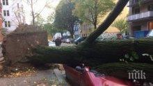 ИЗВЪНРЕДНО! Ужас на входа на Бургас - дърво се стовари върху кола и затисна младо семейство