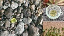 ЧУДО! На Хавай вали дъжд от скъпоценни камъни (ВИДЕО)