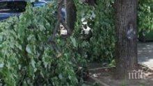 ТРАГЕДИЯ НА КОСЪМ! Клон се стовари в парк, по чудо не нарани дете (СНИМКИ)