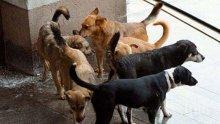 В Южна Корея забраниха със закон да се ядат кучета