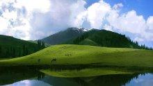 Зеленина край водата