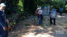 Десетки сигнали за паднали клони във Варна