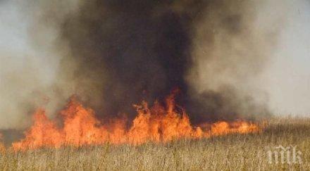 Огнен ад! Пожар погълна 190 дка с пшеница край Пазарджик