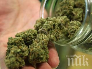 САЩ одобриха медикамент на основата на марихуна за лечение на тежка епилепсия