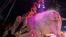 КУРИОЗ! Цирков слон падна в публиката (ВИДЕО/СНИМКИ)