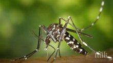 Предприемат нови мерки в борбата срещу комарите в Пловдив