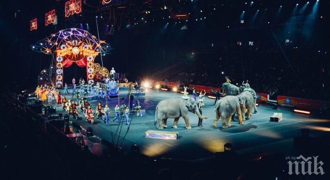 УЖАС! Слон падна в публиката, има пострадал (СНИМКА)