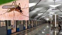СТОЛИЧАНИ ПРОПИЩЯХА: Зловещи комари с огромни размери нападат в софийското метро!