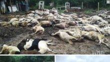 ОТ ПОСЛЕДНИТЕ МИНУТИ! Около 400 животни не са евтанизирани в Шарково заради живи вериги