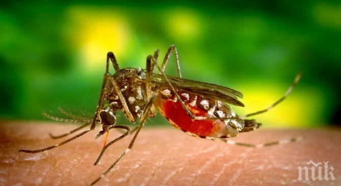 ВНИМАНИЕ! Западнонилска треска плъзна в Сърбия, 11 души са заразени от комари