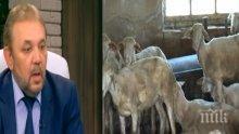 НЕКОМПЕТЕНТНОСТ? Зам.-министър на земеделието за избиването на животните: Аз не съм специалист
