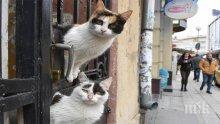 В американската столица започна преброяване на котките