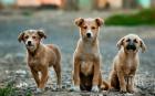 Разследват убийството на 9 кучета в Исперих