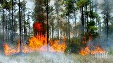 ЕС с допълнителна помощ за Швеция за борба с десетките пожари</p><p>