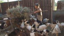 Продължава евтаназията на животни в Шарково