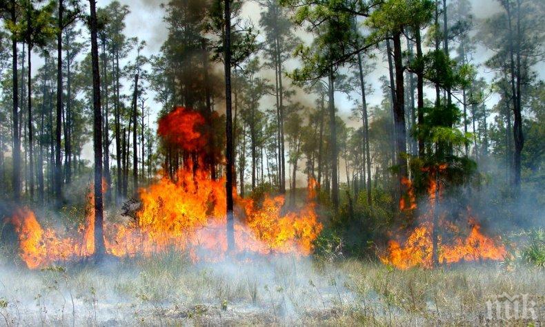 Над 1000 хектара гори изгоряха при пожар