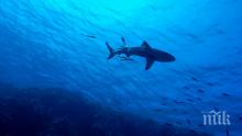 УЖАС СКОВА ЧЕРНА ГОРА! Забелязаха акула в морето