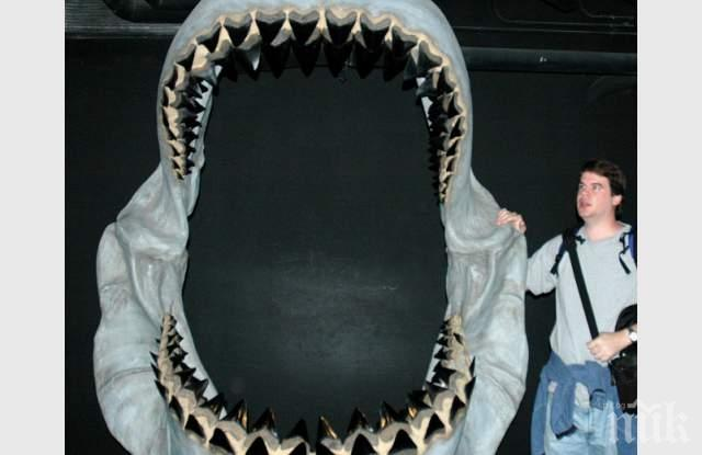 Любител палеонтолог откри зъби на гигантска акула, влиза прав в захапката