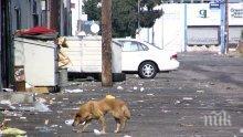 Безстопанствените кучета на територията на Столична община са приблизително 3600