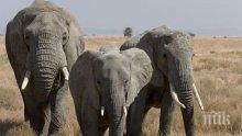"""Учени откриха при слоновете предотвратяващ рак """"зомби-ген"""""""