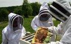 Национална среща събра пчеларите в Беклемето