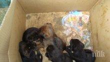 Така се прави! Грък отнесе глоба от 120 000 евро за изхвърлени кученца в контейнер за боклук