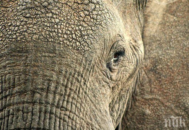 Слон нападна туристи в Шри Ланка (ВИДЕО)