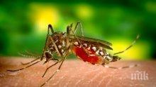 Кои опасни болести пренасят комарите