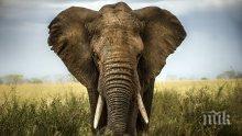 90 трупа на слонове с отрязани бивни откриха в Ботсвана