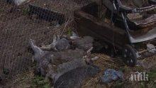 НОВО 20: ЕС забранява да гледаме зайци, кокошки и други животни и птици в клетки