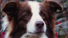 Почина Луси Лу, кучето, което беше кметица на американски град