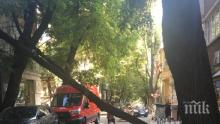 НА КОСЪМ! Дърво падна в центъра на София (СНИМКИ)