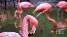 Експерти от РИОСВ спасиха бедстващо розово фламинго в Китен