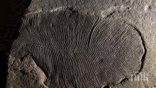 Учени откриха как е изглеждало най-древното животно