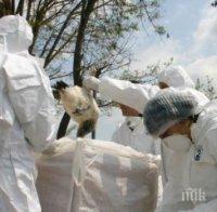 ОПАСНОСТ: Откриха огнище на птичи грип в Пловдивско