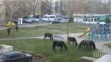 Граждани пасат коне и крави в градски паркове