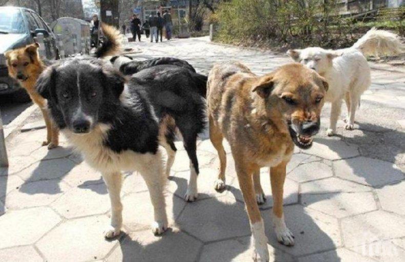 Отровиха седем улични кучета и котки във Враца