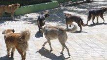 УЖАС! Бездомно куче нахапа жена в Пазарджик - викнали линейка, тя не дошла изобщо (СНИМКА 18+)