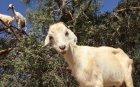 Откраднаха животните на 81-годишен пастир