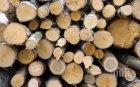 Задържаха 23 кубика нелегално отсечена дървесина