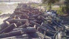 Полицията спипа незаконни дърва за огрев