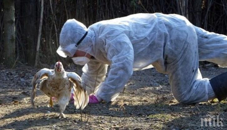 Откриха две огнища на птичи грип в Хасковско