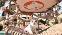 Невероятен парк за бездомни котки отвори врати в Турция (СНИМКИ)