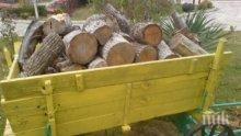 Спипаха бракониери с незаконни дърва във Видинско
