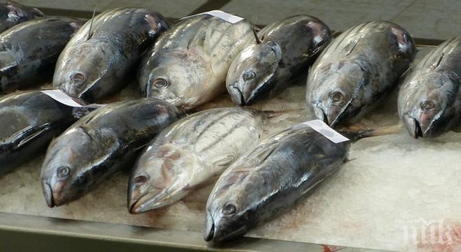 Разбиха нелегален склад за риба