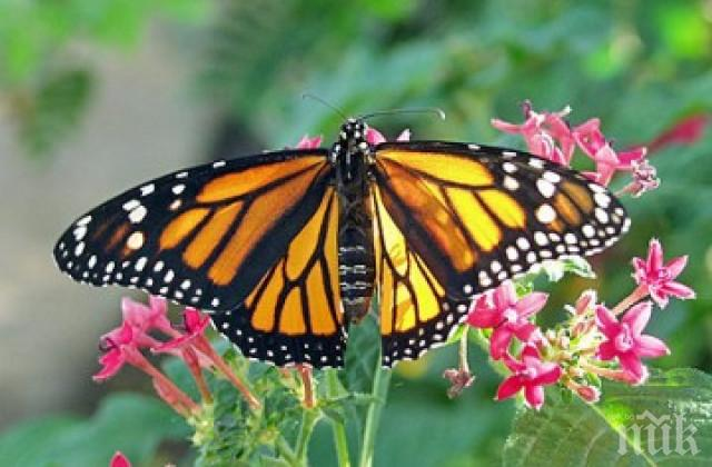 СТРЯСКАЩА ТЕНДЕНЦИЯ: Пеперудите, пчелите и мравките в Германия намаляват
