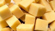 ПРОИЗВОДИТЕЛИ АЛАРМИРАТ: Тонове сирене и кашкавал залежават в мандрите