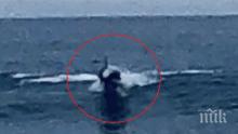 Мъж видя във водата същество, приличащо на човек. Но това, което засне... (ВИДЕО)